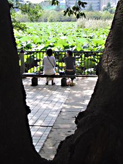 @shinobazu, ueno