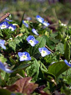 @spring